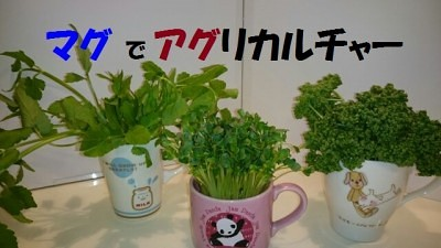 food-agut3-micchi